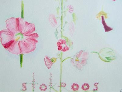 stokroos-tekening